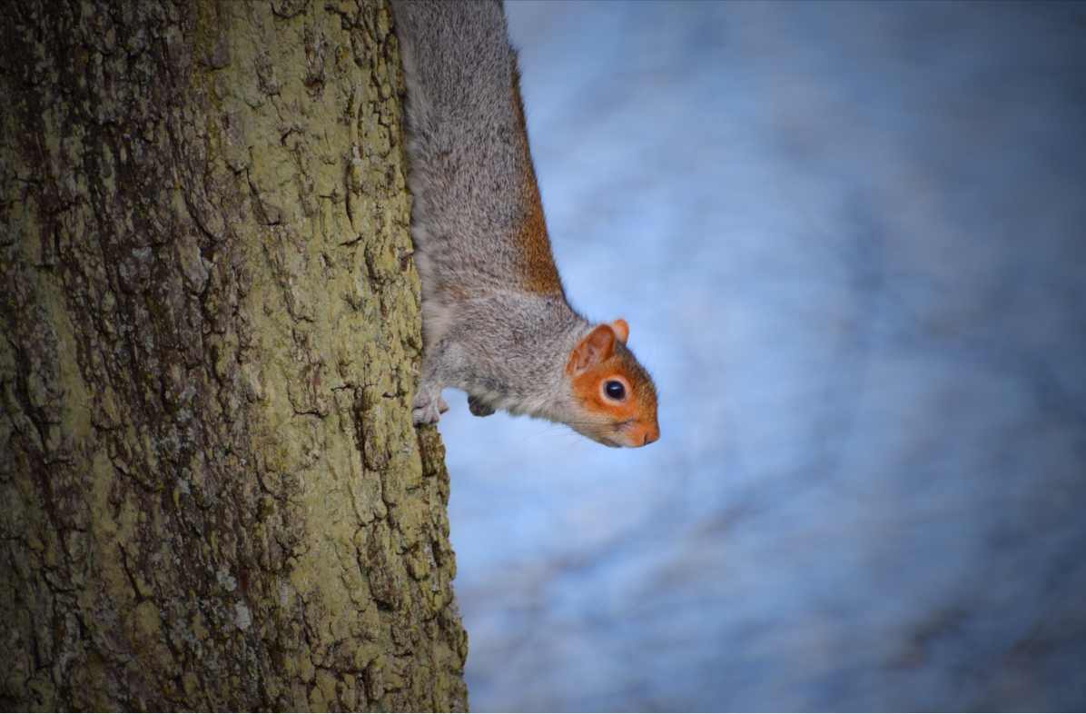 Squirrel © Alan Campbell Photography